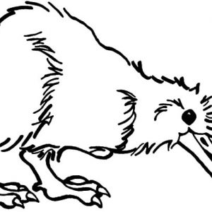 Wild Life Kiwi Bird Coloring Pages