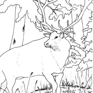 Wildlife Elk Coloring Pages