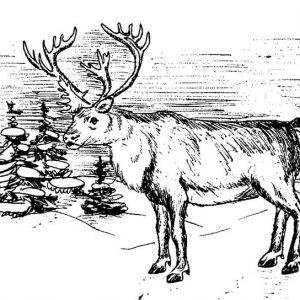 Winter Elk Coloring Pages